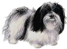 Havanese Dog Custom Designed Counted Cross Stitch Pattern Havanese Dogs Havanese Havanese Puppies