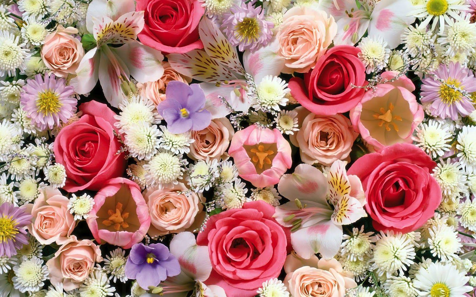 best hd flowers wallpapers 1600×1000 best flowers wallpapers hd (53