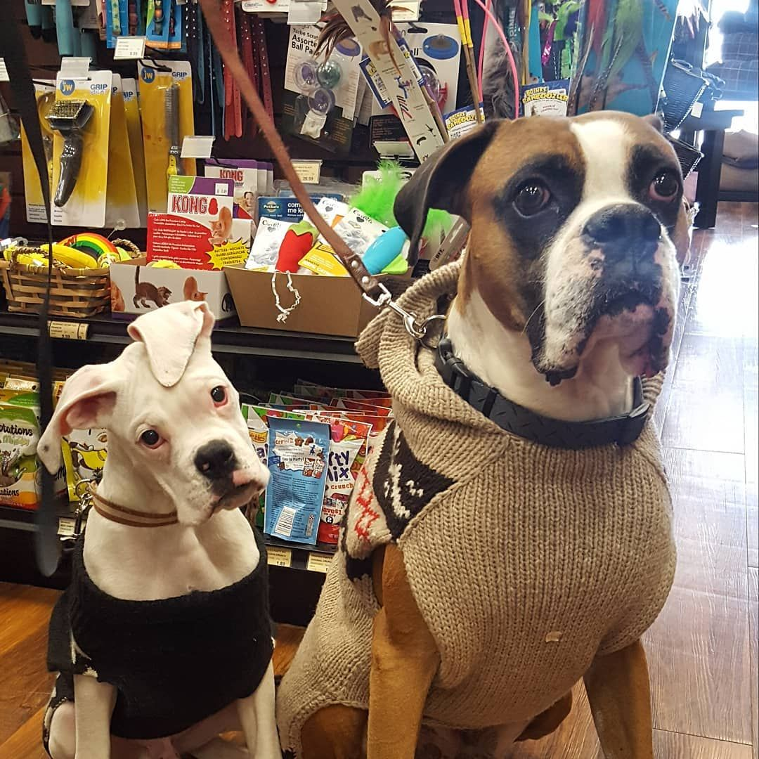 Cutecustomeralert This Handsome Father And Son Duo Shops At Pet