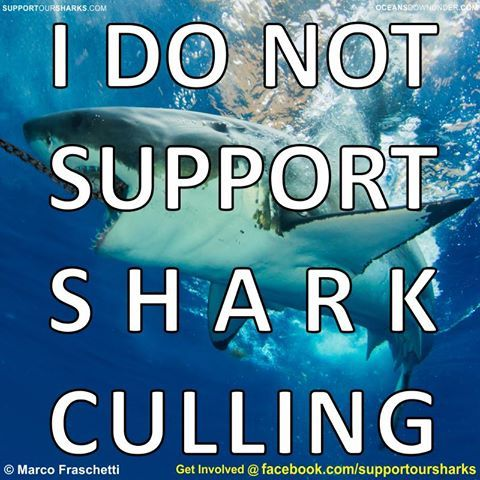 No Shark Culling in Australia! SHARK CULL NOT COOL! say it with a t-shirt!  100% of the profit of this campaign will finance research in marine science and conservation. please help the campaign by sharing the link  http://teespring.com/sharkcullnotcool