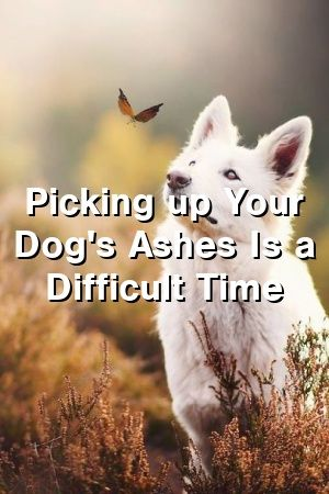 Picking up Your Dog's Ashes Is a Difficult Time  Dogs blog  #dogsideas#doghome#diysfordogs#dogssmiling#dogs#dogandcat#doglove#animaldiyspets#petstuff