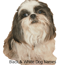 Dog Names Female Thousands Of Great Girl Names For That New Puppy Puppy Names Girl Dog Names Puppies Names Female