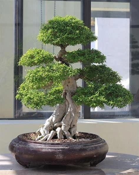 Popular Bonsai Tree Ideas For Your Garden 40 #gardeningforbeginners