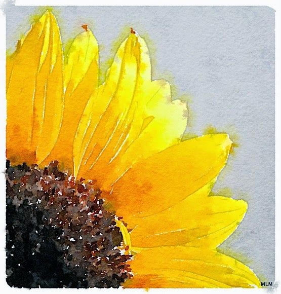 Watercolor Sunflowers Aquarell Sonnenblume Sonnenblumen Malerei