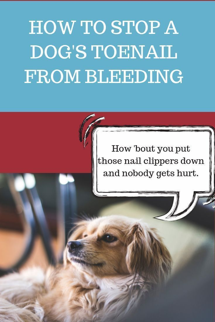 How to stop a dogs toenail from bleeding dog toenails