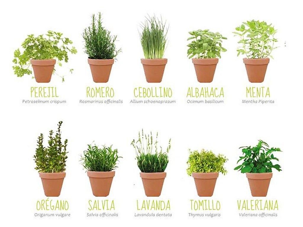 Mis prop sitos de decoraci n 2015 las plantas prop sito - Plantas aromaticas en la cocina ...
