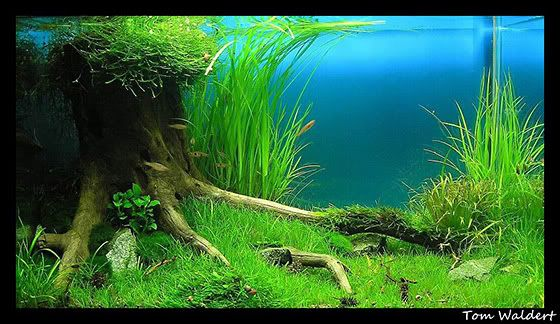 kundenaquarien aquascaping shop f r naturaquarien aquarium pinterest aquarium. Black Bedroom Furniture Sets. Home Design Ideas