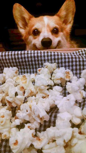 I Notice That You Have Popcorn I Also Enjoy Popcorn Poster
