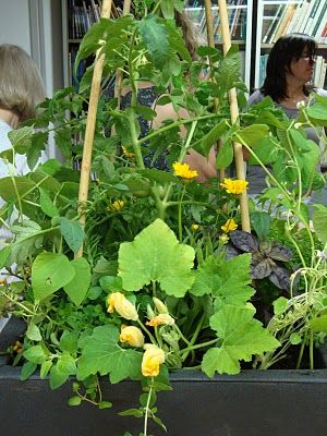 gardens using trellis vegetables for shaded areas on patio