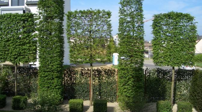Spalierbäume die schwebende Hecke Sichtschutz garten