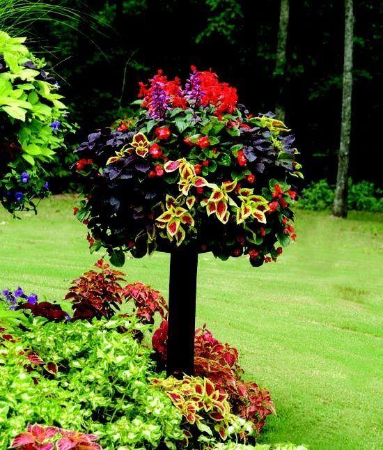 JARDINERIA❤ Plantas y jardines Pinterest Jardinería