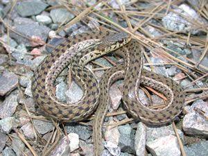 Species Photo Snake Images Snake Animals Matter