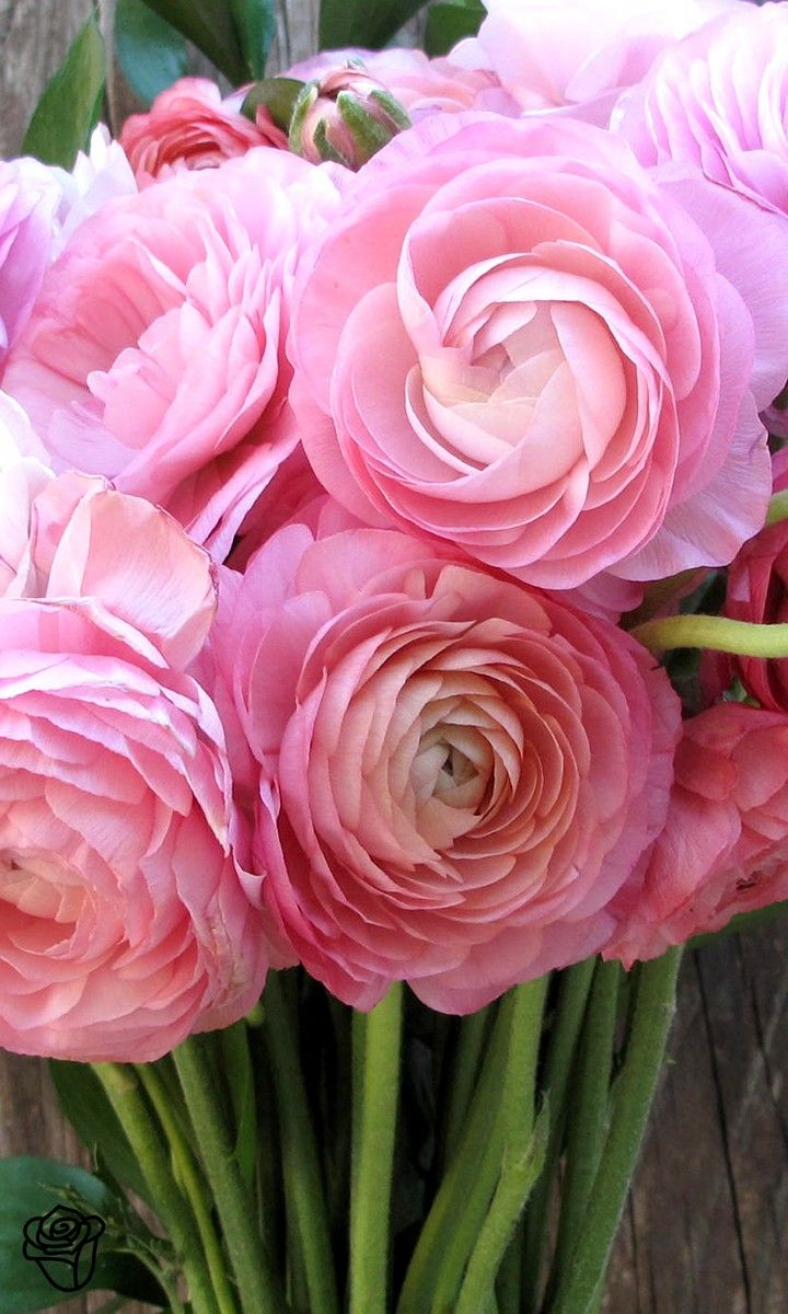 Bouquets simplified this is soooo me pinterest buy farm fresh flowers online flower delivery the bouqs co ranunculus flowersranuculus bouquetpeoniespretty izmirmasajfo Gallery