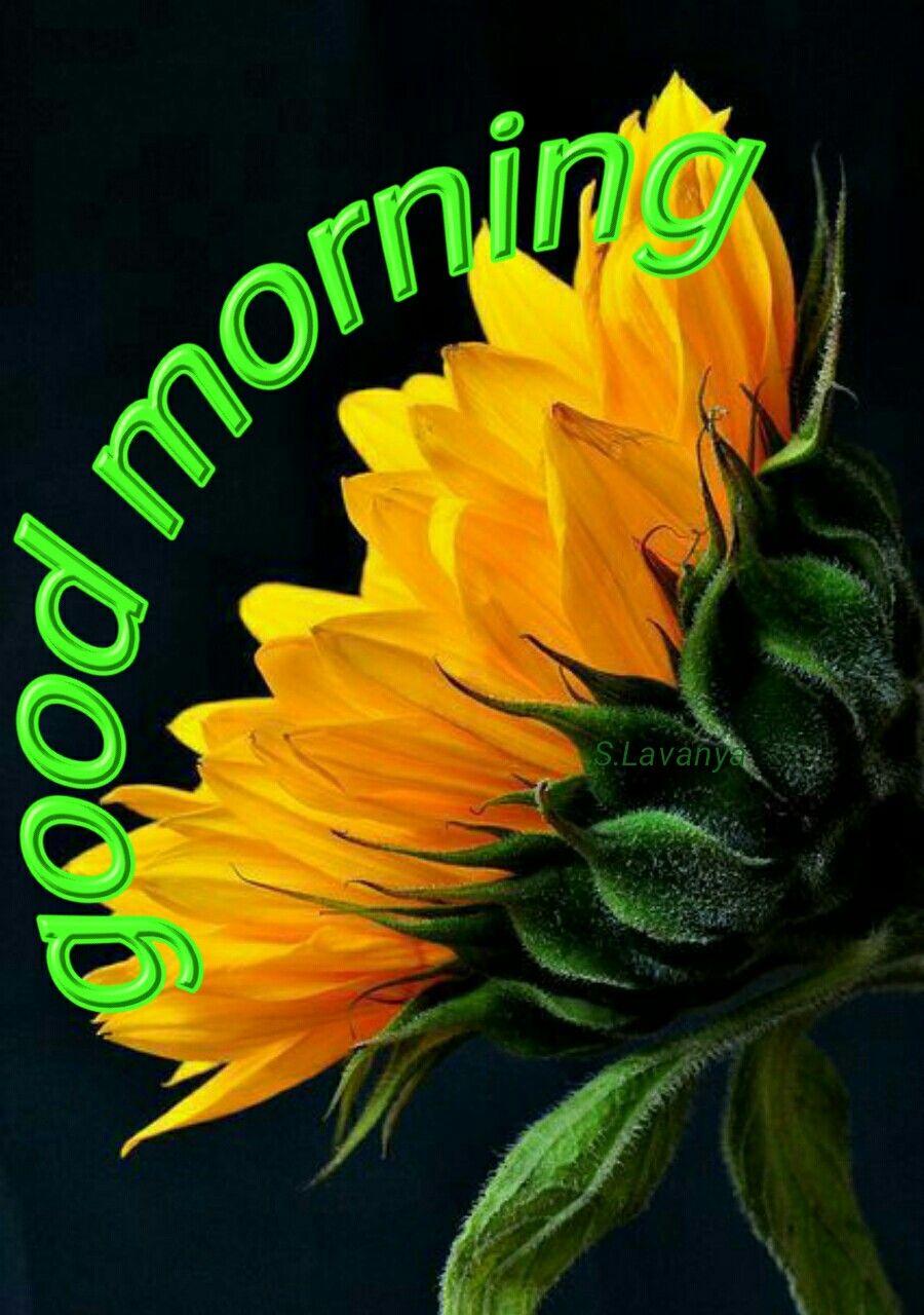Good morning svanya good morning pictures pinterest morning good morning svanya m4hsunfo