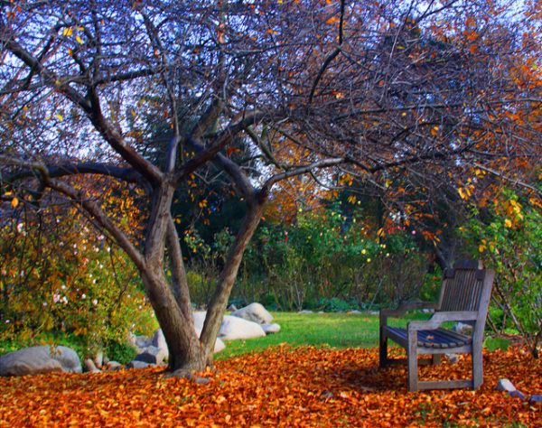 Get Your Fall Fix 10 Best Places To See Autumn Leaves In Southern California Places To See The Good Place Autumn Leaves
