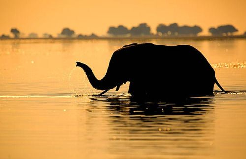 i really do love elephants...these mammals value family and take care of their young for life