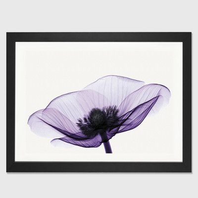 """East Urban Home 'Anemone II' by Robert Coop Framed Graphic Art Size: 24"""" H x 32"""" W x 1"""" D, Frame Color: Black"""