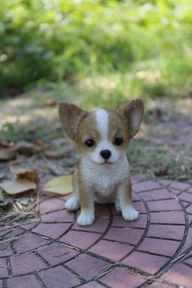 Brown And White Chihuahua Puppy Statue Really Cute Puppies Puppies