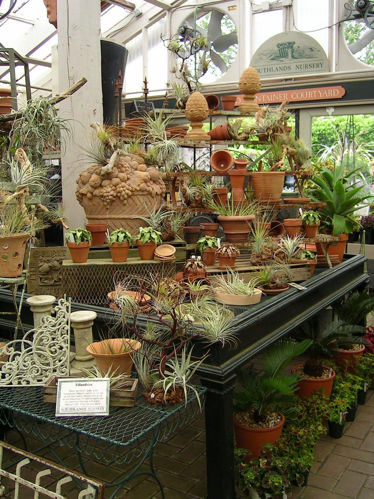 Garden Centre: Paradis Express: Ailsa In Southland Nursery
