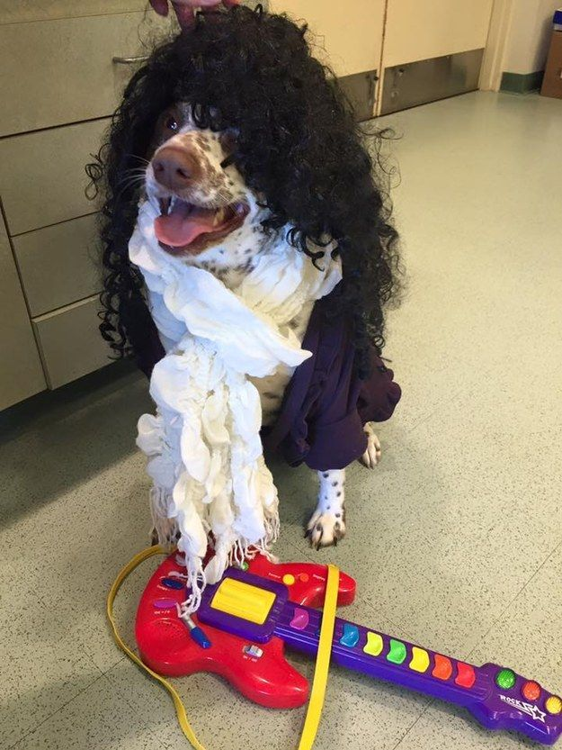 These Shelter Dogs Dressed Up As Prince To Help Find Forever Homes ... 2e7c474fe