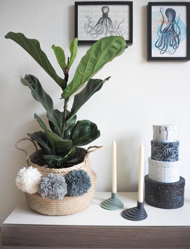 Grün und Selbstgemacht Die neue Geigenfeige im Korb mit selbst - Wohnzimmer Design Grun