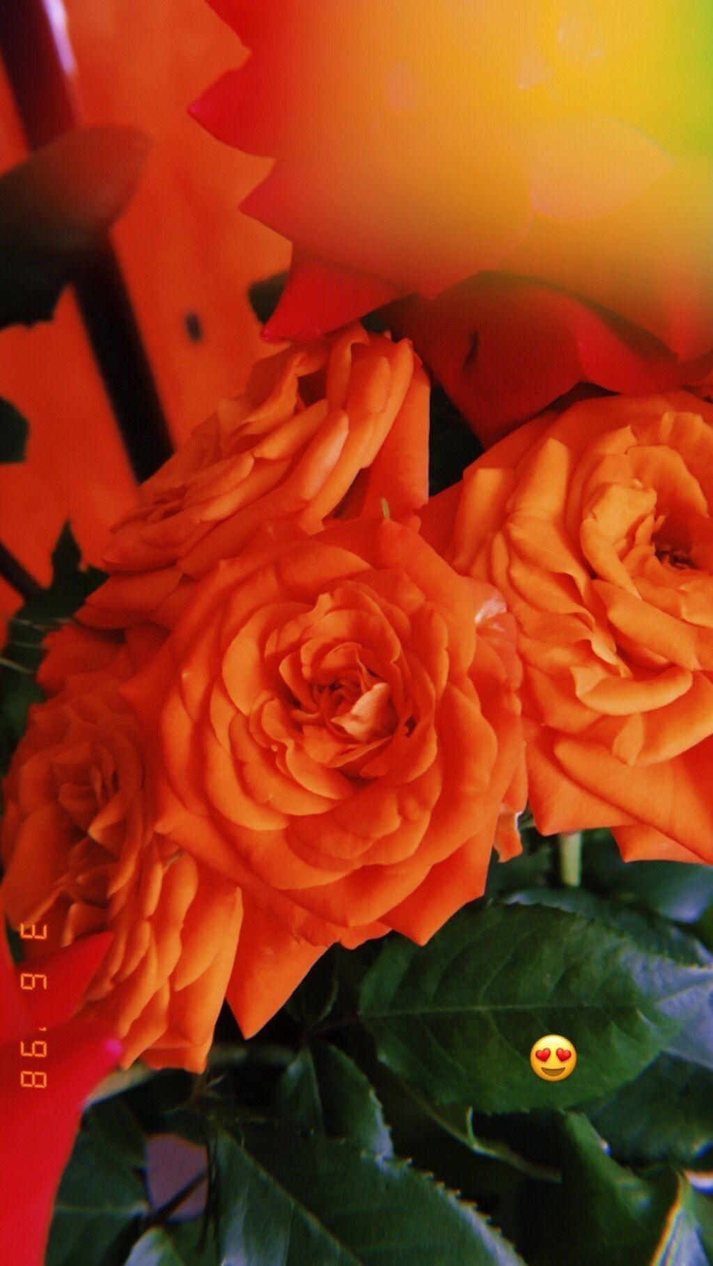 Pin By Eshab On Yeah I Love Flowers Flowers Love Flowers Rose