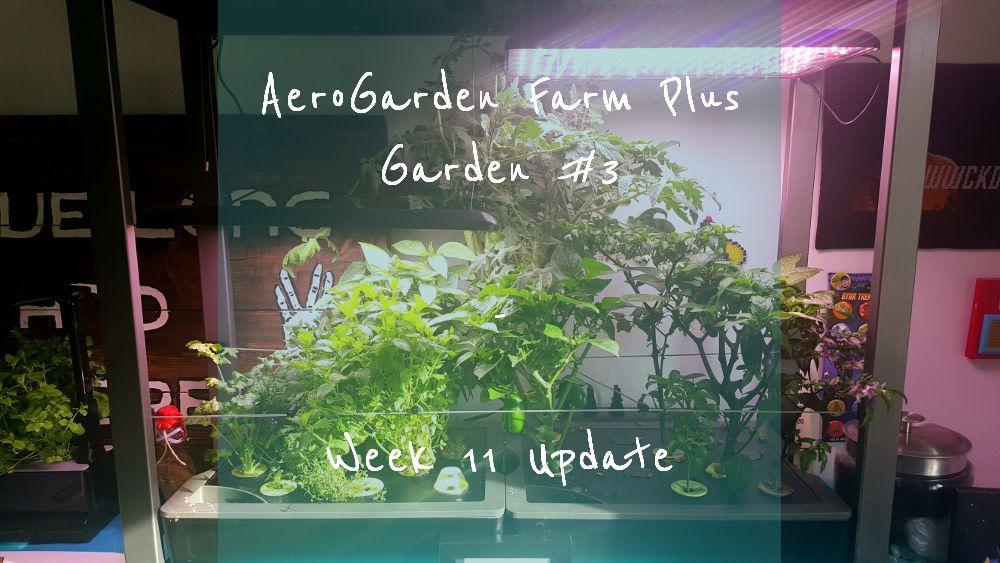 Aerogarden Farm Plus Garden 3 Week 11 Update Aerogarden 400 x 300