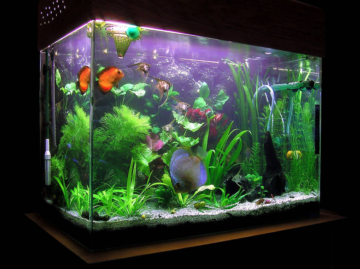 Fish aquarium is good in home -
