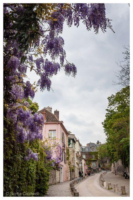 Wisteria street - Paris, Montmartre