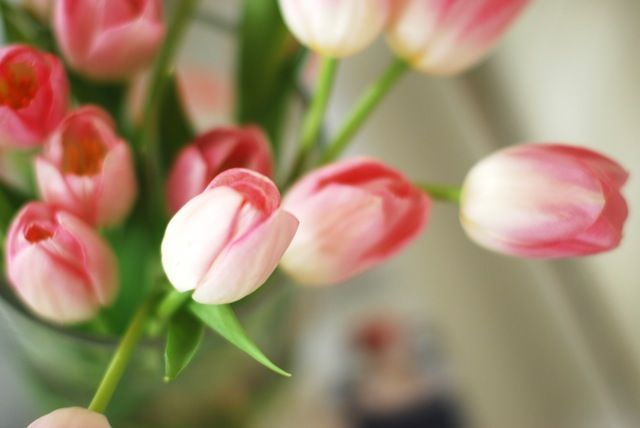 Pink and white tulips are so romantic!  http://www.flowermuse.com/types-of-flowers/tulips/pink-and-white-tulips-150-stems.html