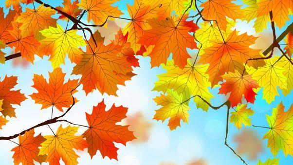 Autumn Leaves Hd Wallpapers Hdqwalls Com Autumn Leaves Wallpaper Fall Wallpaper Nature Wallpaper Autumn leaves wallpaper hd