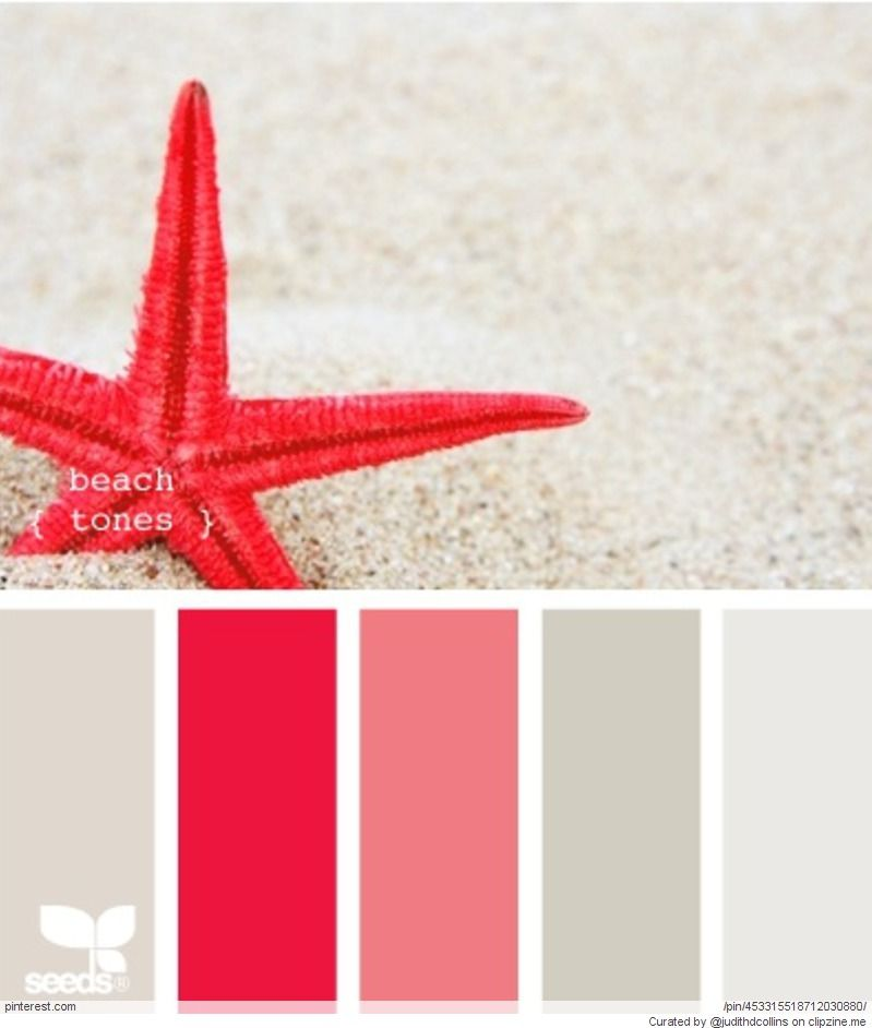 Starfish and Grey beach tones Color Inspiration