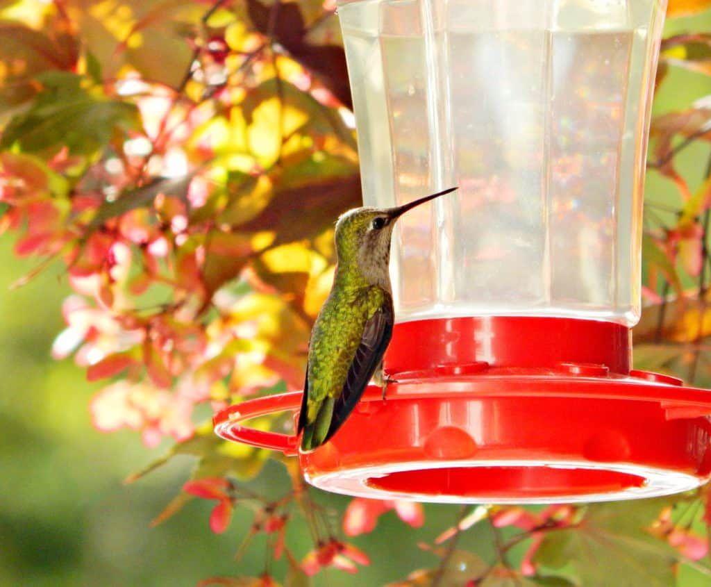 How to Make Hummingbird Nectar | Recipe | Make hummingbird food, Hummingbird food, Hummingbird ...