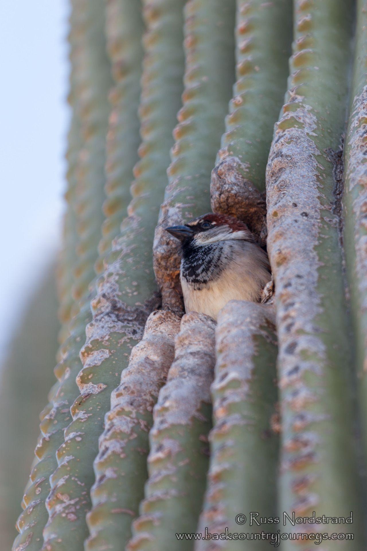 Bonito Página Para Colorear Cactus Wren Regalo - Dibujos Para ...