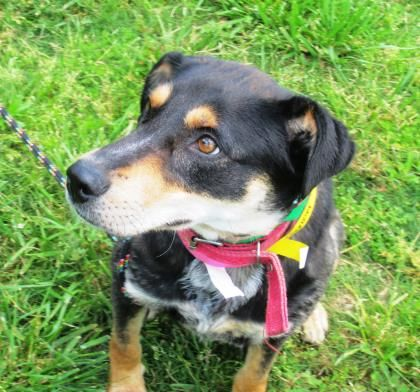 Adopt 25281244 A Lovely 3 Years Dog Available For Adoption At