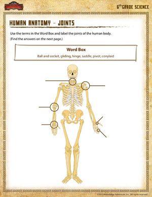 Human Anatomy – Joints - Printable Sixth Grade Science Worksheet ...