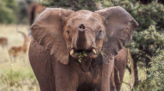 Dead elephants: Tanzania's censors  hush up the massacre.Please sign & share,thanks.