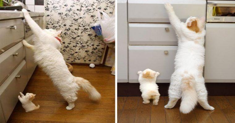 11 Gatos Com Versoes Em Miniatura De Derreter O Coracao Em 2020