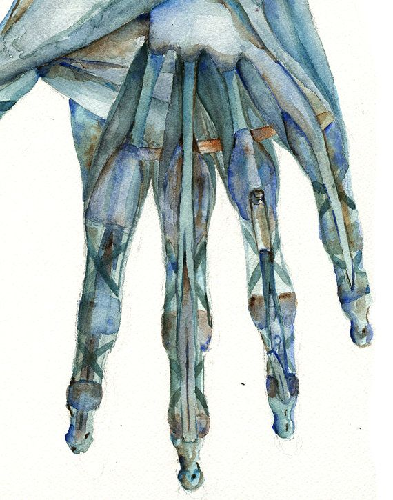 Hand Anatomy Two Print Art Set Hand And Finger Watercolor Art Set