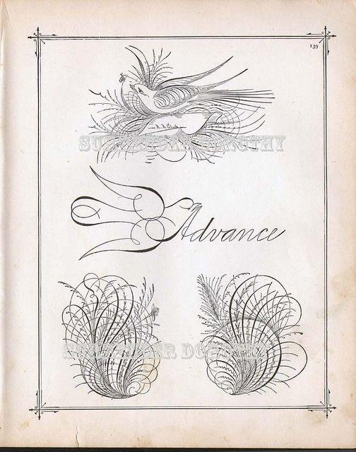 Bird Flourishes Advance Victorian Calligraphy 1886 | Flickr - Photo Sharing!