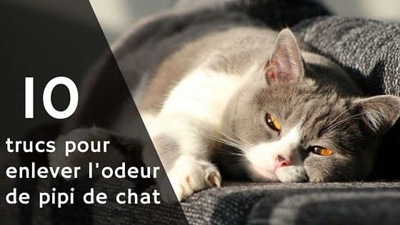 10 trucs pour enlever l 39 odeur de pipi de chat astuces. Black Bedroom Furniture Sets. Home Design Ideas