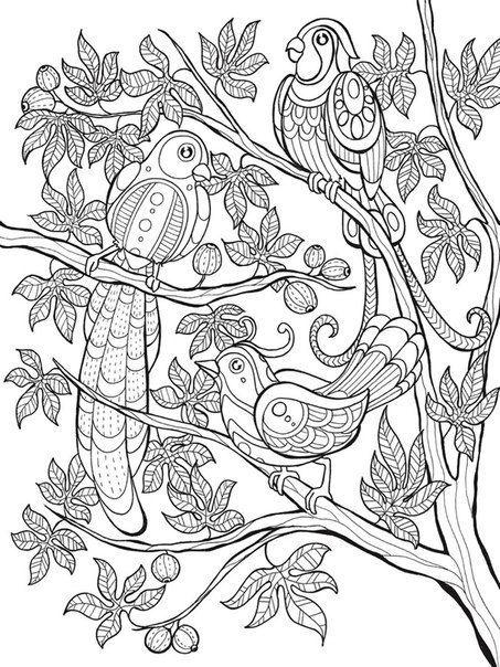 vögel malvorlagen  wunderschöne ausmalbilder  dekoking
