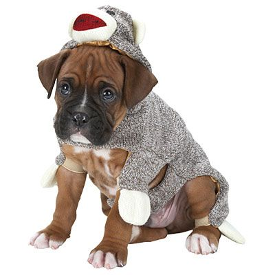 Sock Monkey Pet Costume 10 Sock Monkey Dog Costume
