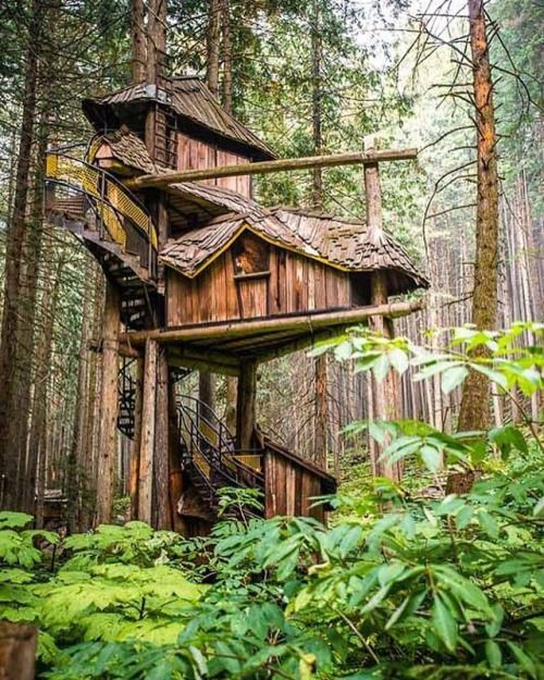 One of the coolest treehouse in British Columbia, Canada. This treehouse rises 50 into the trees at #enchantedforest  #treehouse #tinyhouse #treehouseclub #treehouses #britishcolumbia #beautiful #inspiring