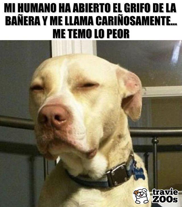 "Photo of TravieZOOs on Instagram: ""NOT WINTER! DO NOT BE CRUEL! 😂🐶🐾🚿 # shower # bathroom # dogs #hygiene # pets #dogs #bath """