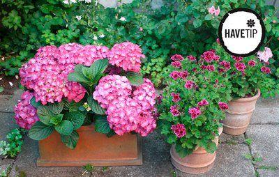 10 Nemme Blomsterplanter Du Kan Dyrke I Krukker Pa Terrassen Blomster Havekrukker Og Krukker