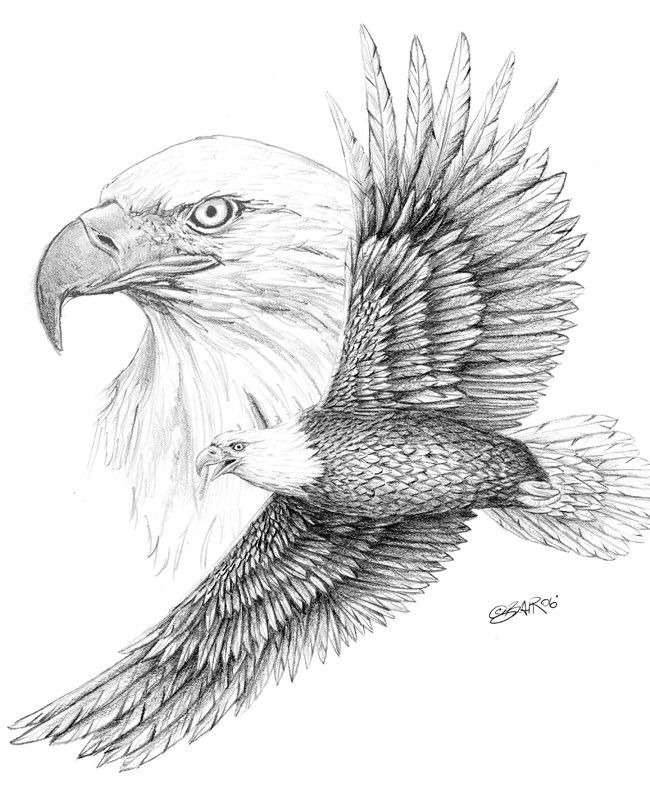 Bald Eagle Sketch - Bing Images | ADULT COLOR in 2019 ...