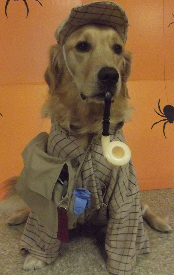 River As Sherlock Holmes Famous Detectives Golden Retriever Dogs