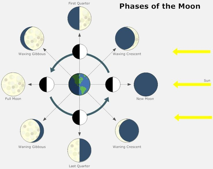 Printable Diagram Of The Phases Of The Moon Phases Of School