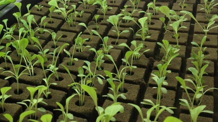 Formas Alternativas De Cultivo Sistemas Acuapónicos